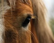 For the Love of Writing and Horses - Vanya Erickson